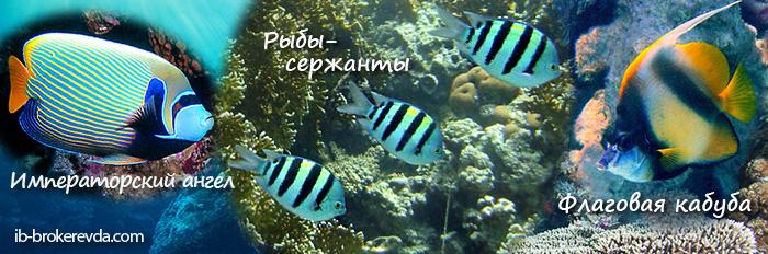 Рыбки Красного моря.