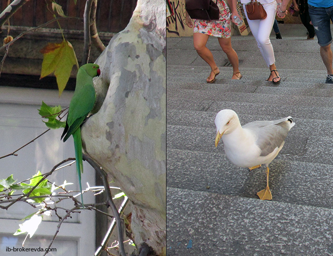 попугай и чайка